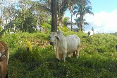 Farms & Agriculture4
