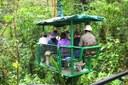Costa Rica Nature Braulio Parque Canopy Tram