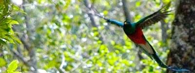 Los Quetzales Nat'l Park Bird Watching