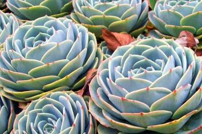 Los Quetzales Nat'l Park Plant Life