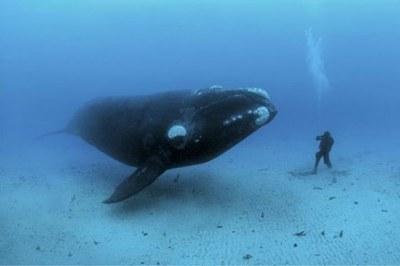 Marina Ballena Nat'l Park Whale Watching