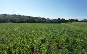 Farms & Agriculture Land For Sale in Costa Rica