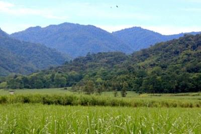 Agriculture Land Cartago